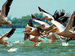 Дунайский биосферный заповедник