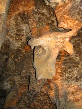Пещера хрустальная. Буйвол