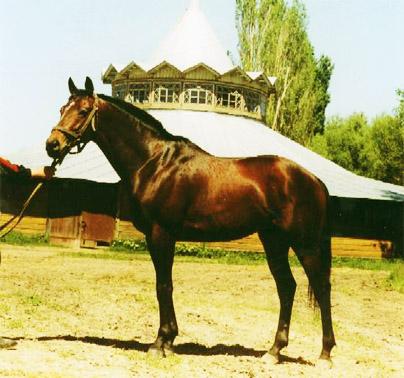 Деркульский конный завод. Жеребец