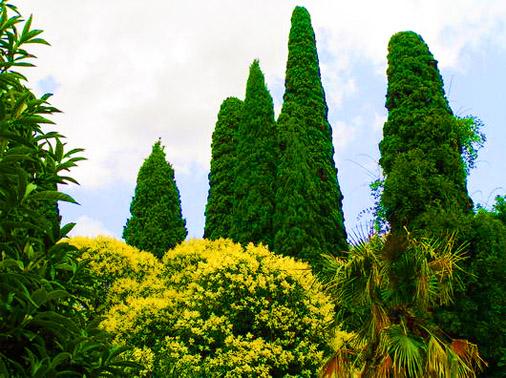 Никитский ботанически сад