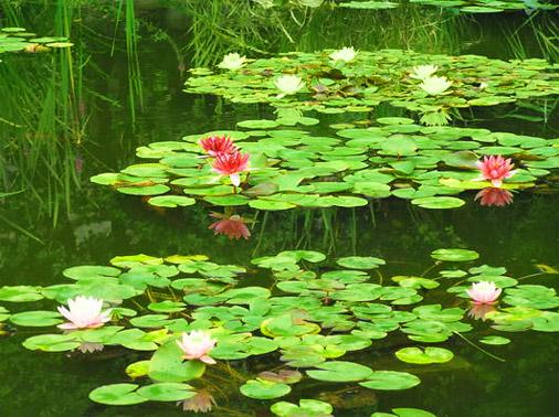 Никитский ботанический сад. Озеро