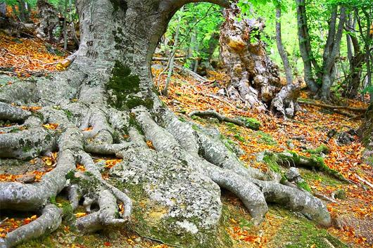Склоны Демерджи, деревья в буковом лесу