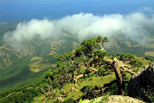 урочище Демерджи, скалы Демерджи. Южные склоны горы