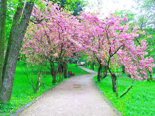 Парк в замке Шенборнов