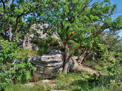Мыс Сарыч. Растительность