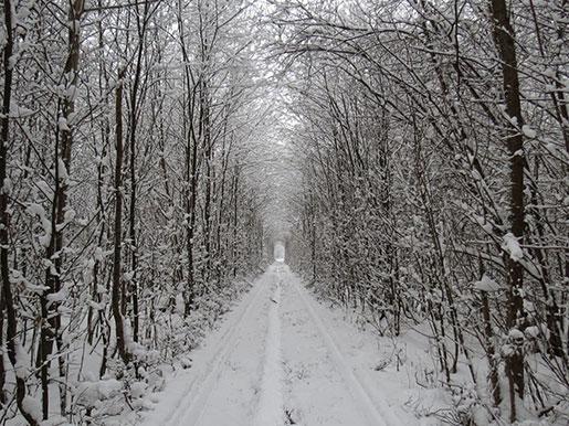 Тоннель любви зимой