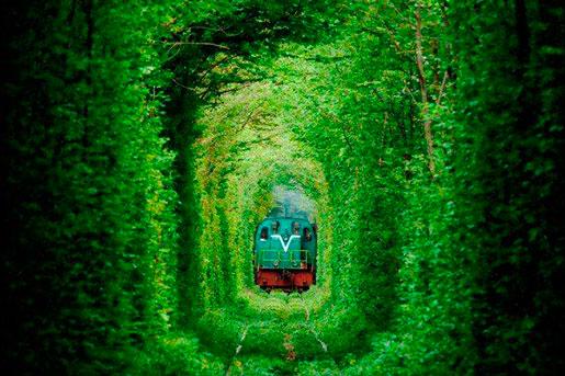 Тоннель любви летом