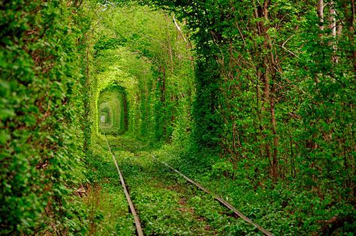 Тоннель любви весной