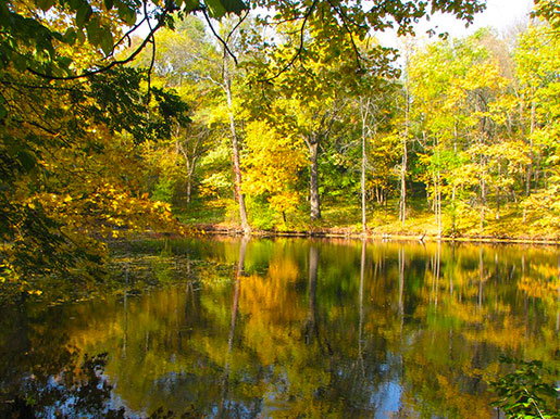Дендропарк Осенью