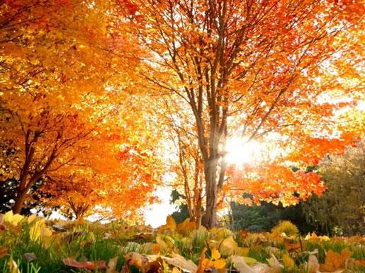 Осень в парке Тростянец