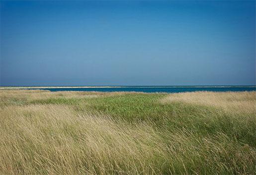Бирючий остров, Геническ