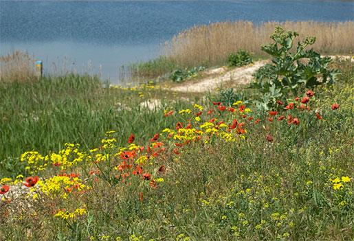Полевые цветы на острове