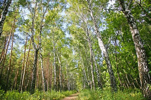 Великоанадольский лес