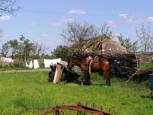 Казацкий хутор Галушковка, Гречаное