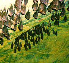 Красные пещеры или Кизил-Коба