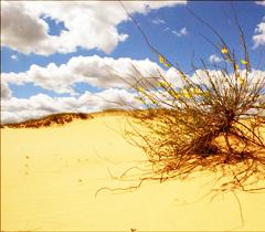 Алешкинские пески