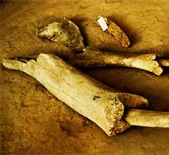 Археологический музей «Добраничевская стоянка»