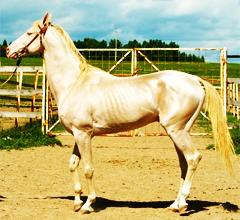 Деркульский конный завод